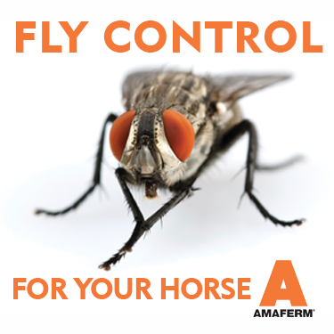 Fly Control for your horse