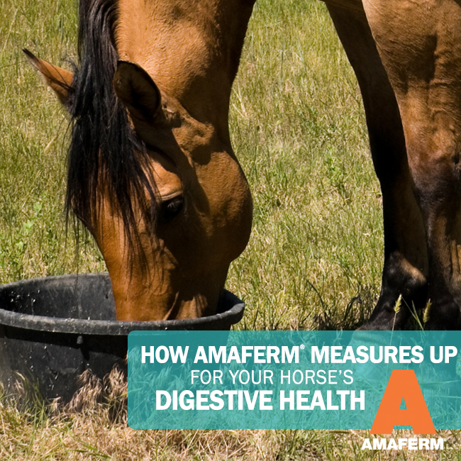 amaferm-for-digestive-health-social