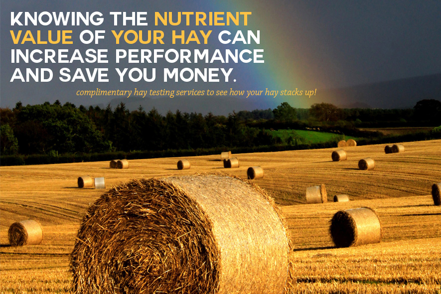 Know the Nutrient Value of Your Hay