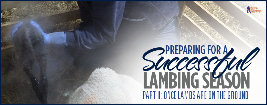 surechamp-lambing-header-feb2016