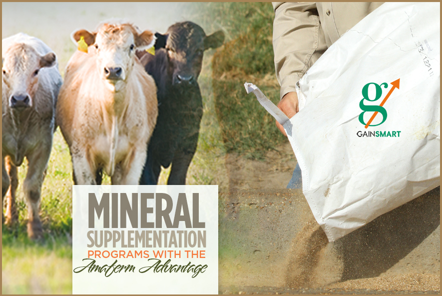 Mineral Supplementation with the Amaferm Advantage