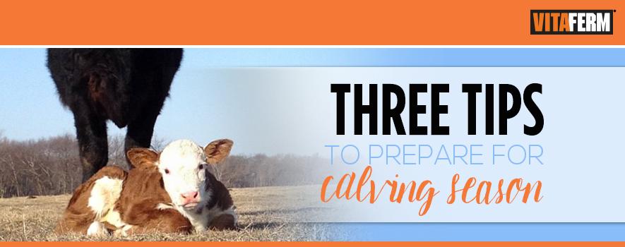 Tips to Prepare for Calving Season
