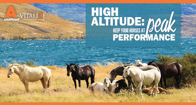 vitalize-header-july2016-altitude