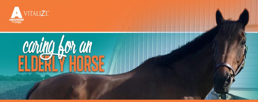 Caring for Elderly Horses