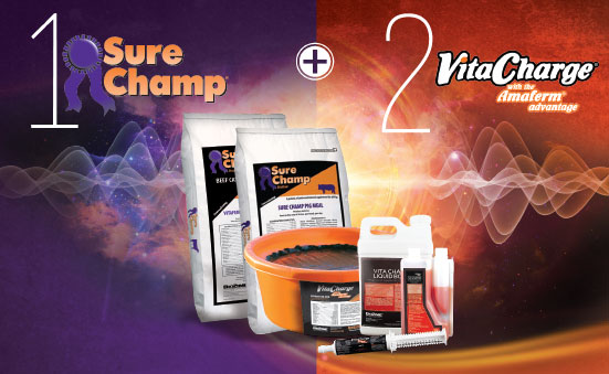 Product Focus: Sure Champ® + Vita Charge®