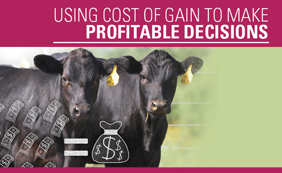 Using Cost of Gain to Make Profitable Decisions
