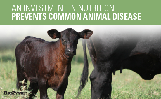 An Investment in Nutrition Prevents Common Animal Disease