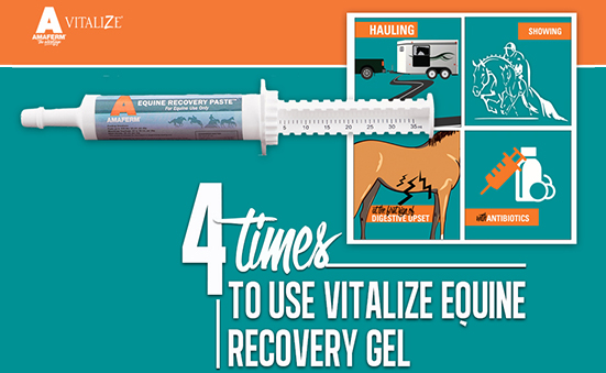 4 Times to Use Vitalize Equine Recovery Gel