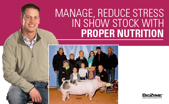 Manage, Reduce Stress in Show Stock with Proper Nutrition