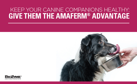 Keep your Canine Companions Healthy: Give them the Amaferm® Advantage