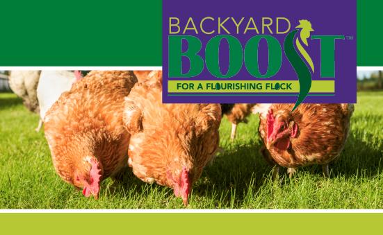 Backyard Boost for a Flourishing Flock