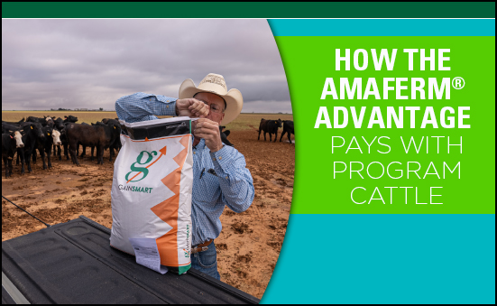 How the Amaferm® Advantage Pays with Program Cattle