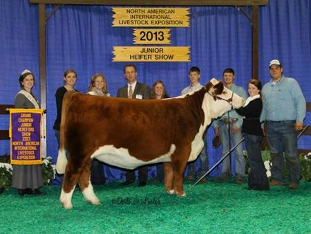 Melissa Grimmel, Grimmel Girls Show Cattle | Maryland