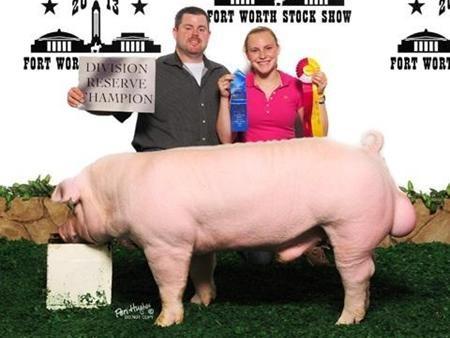 2013-ftworthstockshow_rc-chester-boar_daniels