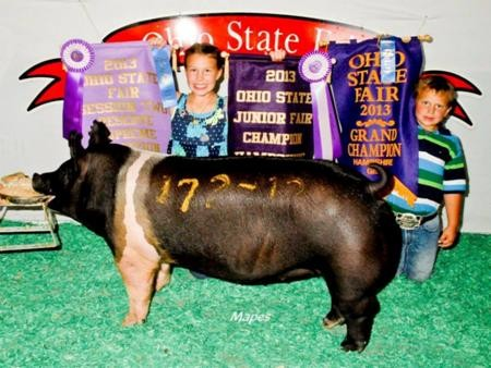 2013-oh-stfair_rsc-ovrlbreed_wendt