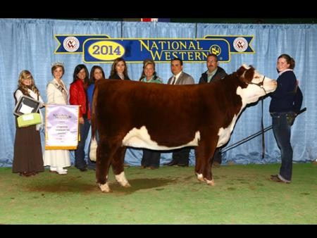 2014-nwss_rgc_hornedhereford_korbincollins