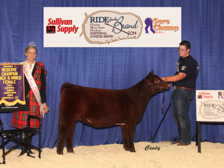 Division 1 Reserve Champion Shorthorn_ James Johnson