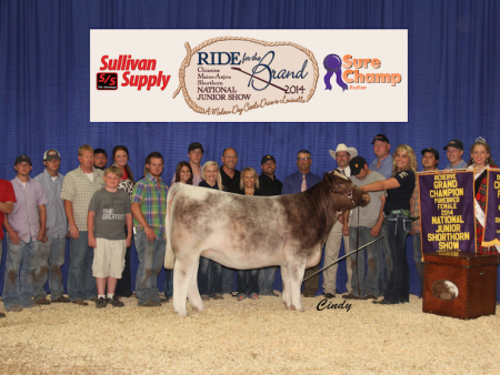 Reserve Grand Champion Shorthorn Female_Adrienne Trennepohl