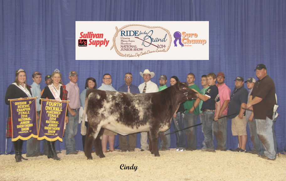 4th Overall Shorthorn Heifer_Andrew Hodges