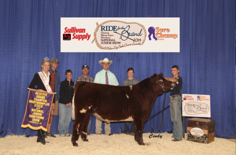Reserve Grand Champion Shorthorn Plus Steer _Kaleb Miller