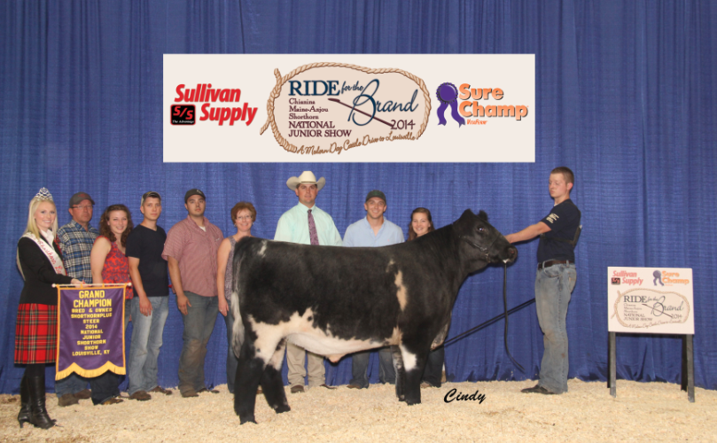 Grand Champion Bred & Owned Shorthorn Plus Steer_Joshua Lorenz