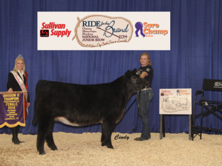 Champion Division 2 Shorthorn Plus_ Gracie Danner