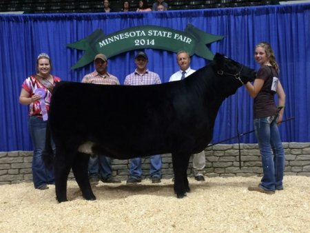 MN Foundation Simmental