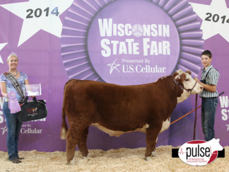 Wisconsin Hereford Steer