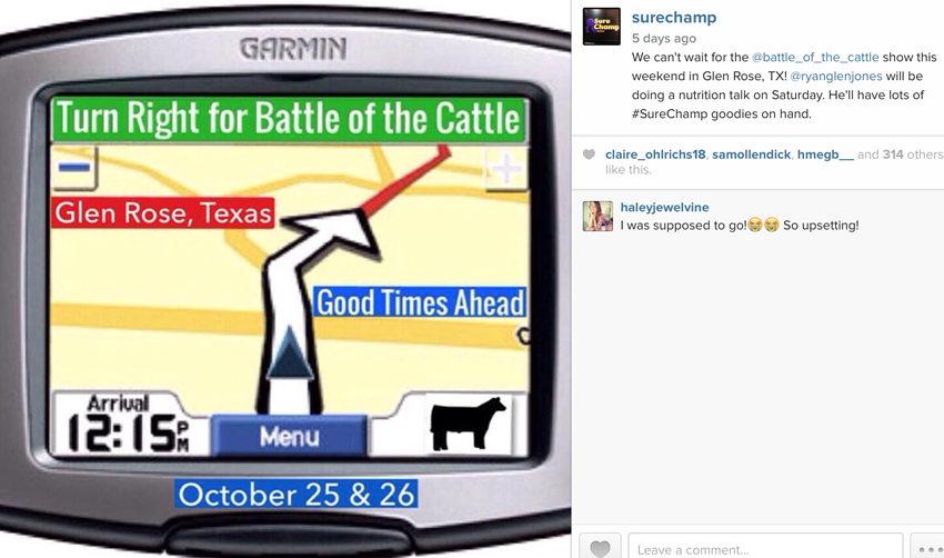 Battle of the Cattle