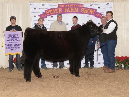 2015 Reserve Steer FS