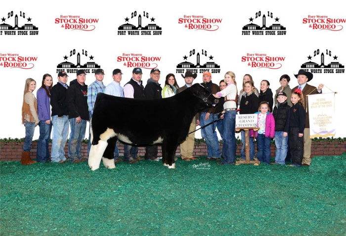 Reserve Champion Steer Fort Worth