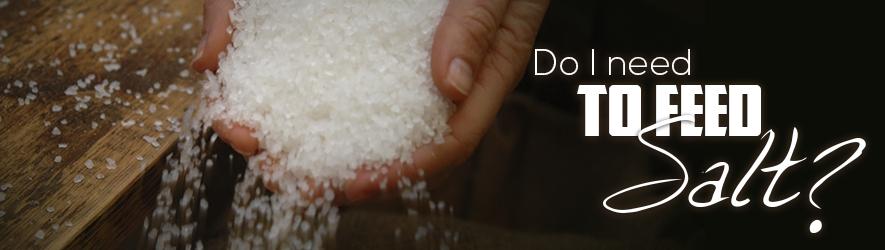 Do-I-Need-Feed-Salt-Header