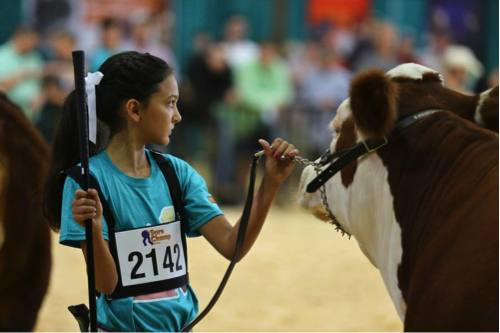I love this picture of my youngest daughter that Sure Champ took at our Jr. National Hereford Expo last year in Harrisburg, Pennsylvania. Here is Audrey in Jr. Showmanship contest where she won Reserve Champion. Proud family moment. This is why we do what we do! It's worth every penny, every mile and every long hour in the barn to have moments like these.