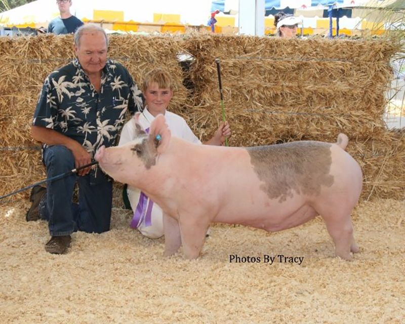 Nick Strode-4H Grand Champion-Marin County Fair