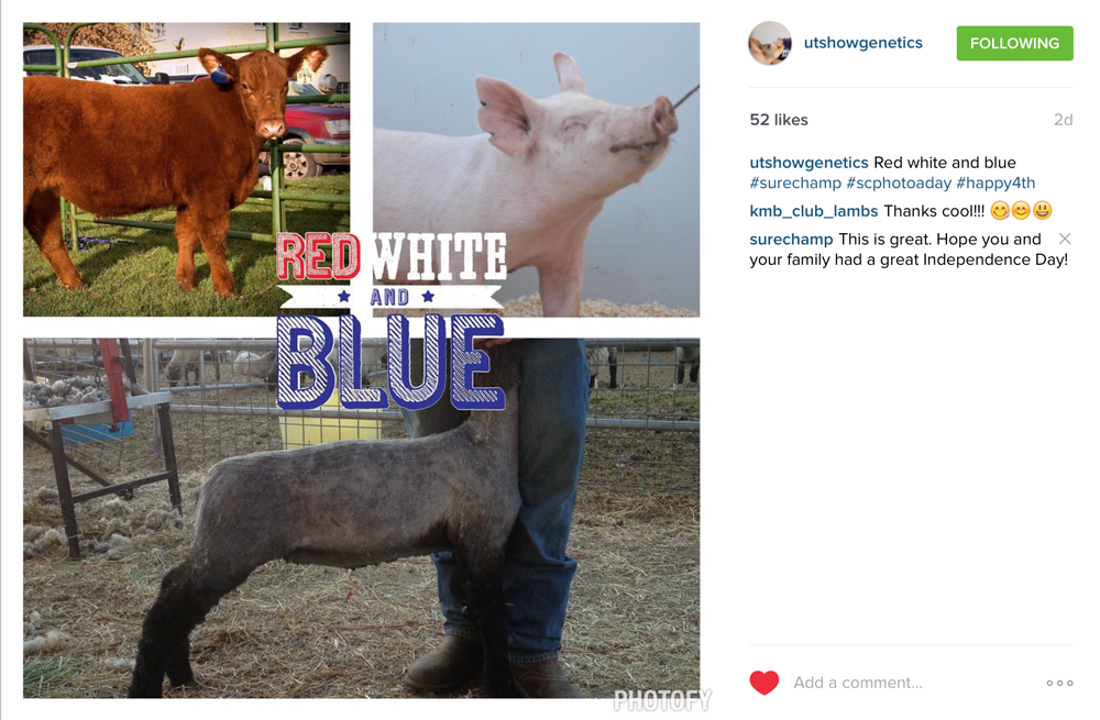 livestock red white and blue