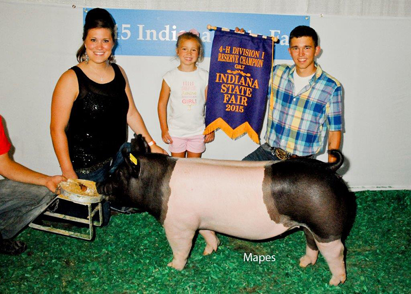 Brady Newhouse IN Reserve Grand Champion Gilt Div I IN State Fair