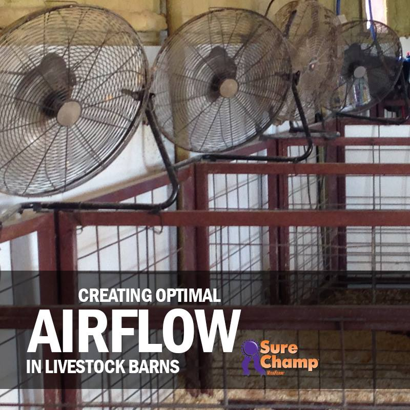Creating Optimal Airflow in Livestock Barns