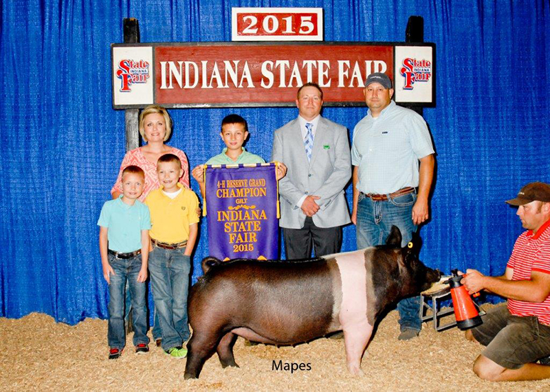 Caden Brubaker IN Grand Champion Hampshire Gilt and Reserve Overall Gilt Indiana State Fair