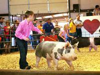 Heart of Ozarks Fair_Reserve Champ Hof_Brylon Mayberry