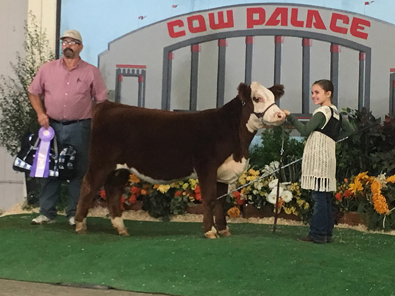 ReserveHerefordFemale_CowPalace_KaitlinDores