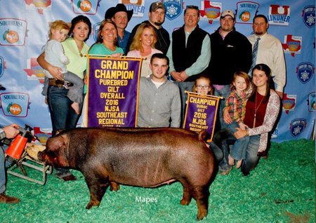 Grand Purebred Gilt Southeast Regional