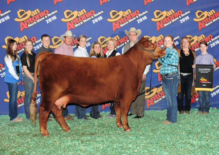 Pitchford grand champion red brangus San Antonio
