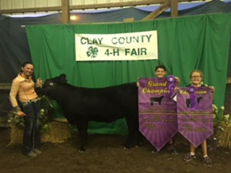 Lexus_Mercer_2016Clay County Heifer