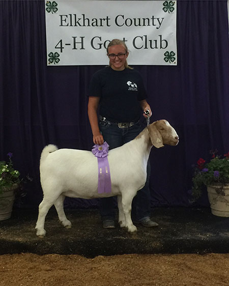 Madison_Newcomer Reserve Grand Champion Breeding Stock