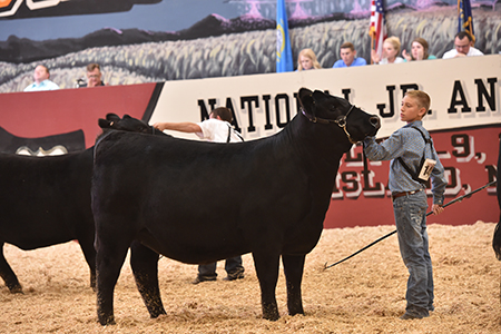 Austin Nowatzke National Junior Angus Show Grand Champion Owned Female