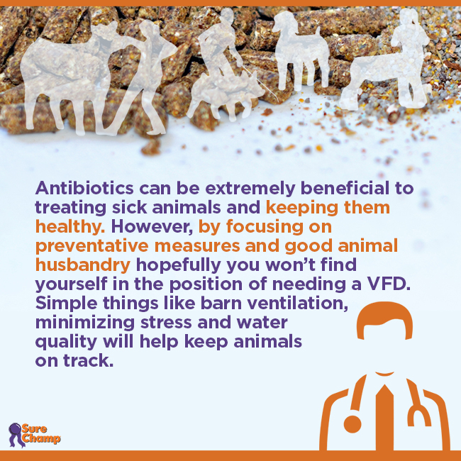 Antibiotics use in Show Livestock