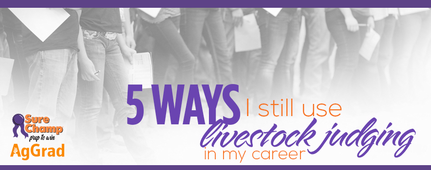 5 Ways I Use Livestock Judging in My Career