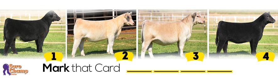 Prospect Heifer Livestock Judging Class