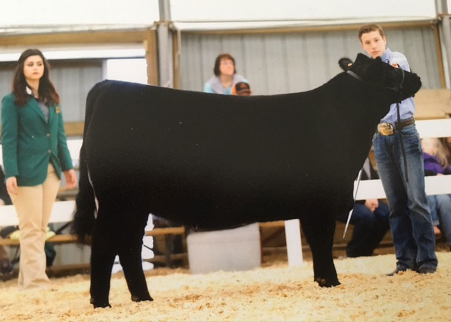 16-Grand-Champion-Owned-Angus-Heifer-VA-State-Fair-Ryan-Borer