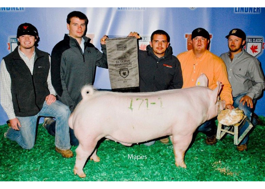 16-res-champ-nsr-fall-classic-osu-swine-center